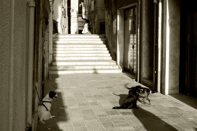 Dogs waiting outside the farmacia